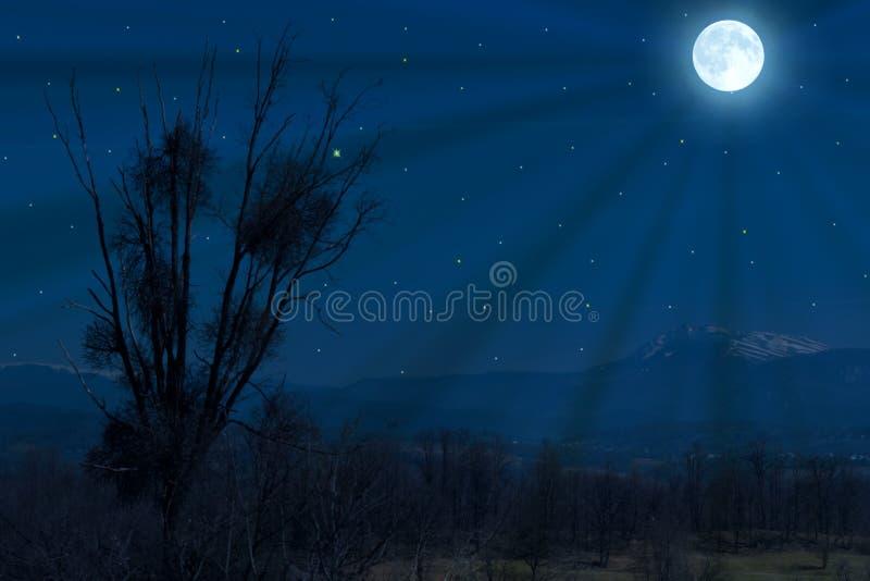 Vollmond über dem Wald und den Feldern Baumschattenbild im Mondschein stockbild
