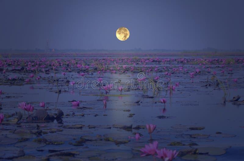 Vollmond, der über rotem Seerosesee glättet lizenzfreies stockfoto