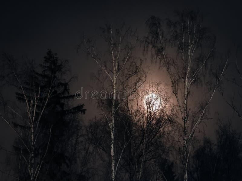 Vollmond, der durch das Holz im Winter scheint lizenzfreie stockfotografie