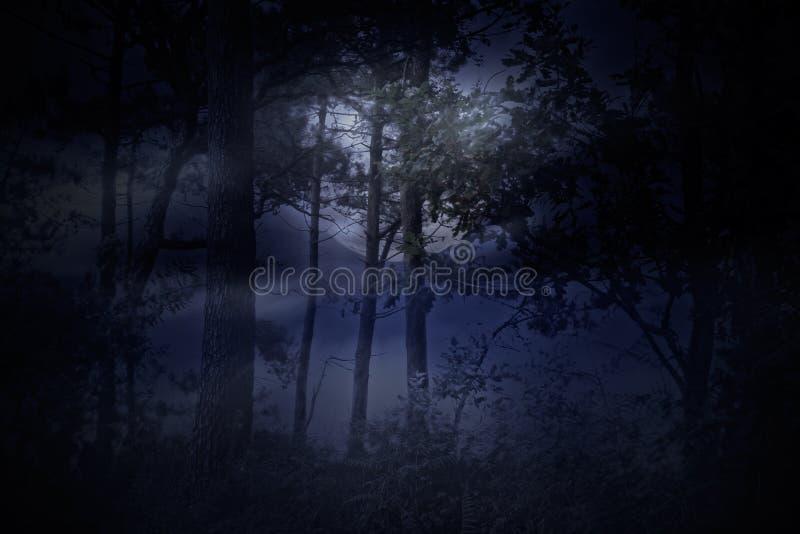 Vollmond steigt über einen Wald auf einer nebelhaften Nacht lizenzfreies stockfoto