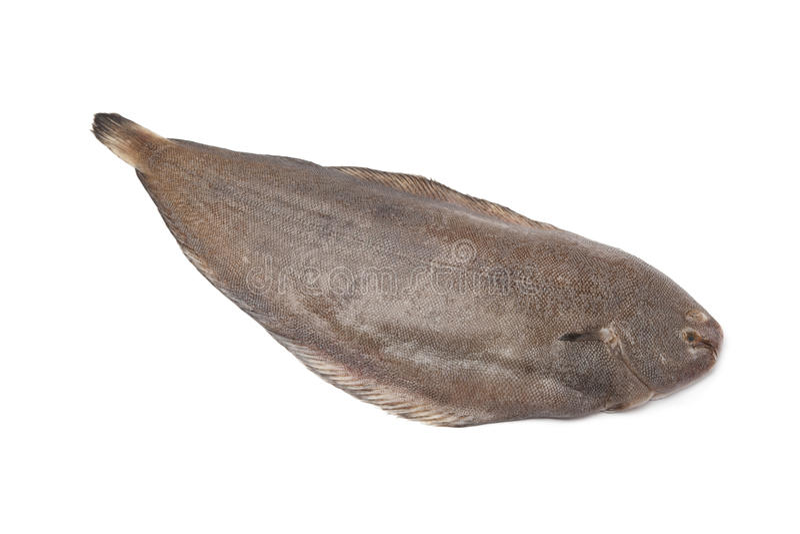 Vollständige einzelne frische alleinige Fische stockfotografie