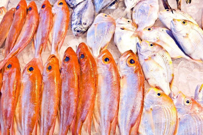 Vollständige frische Fische werden im Fischmarkt angeboten lizenzfreies stockfoto