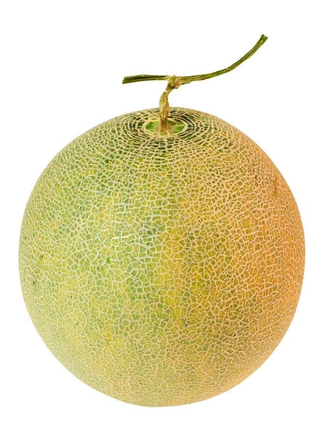Vollständige Warzenmelone stockfotos