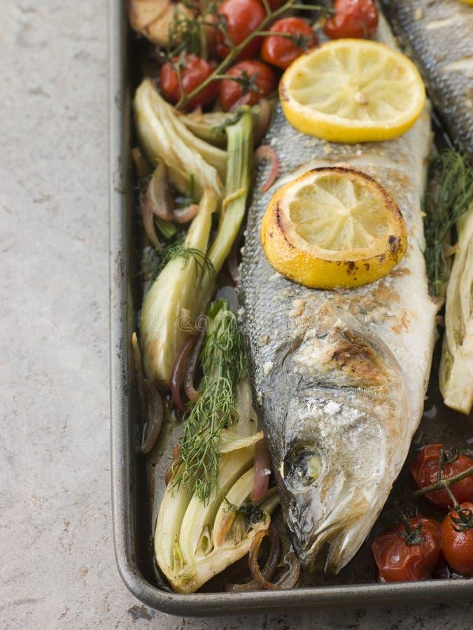 Vollständiger Seebarsch gebraten mit Fenchel und Zitrone lizenzfreies stockfoto
