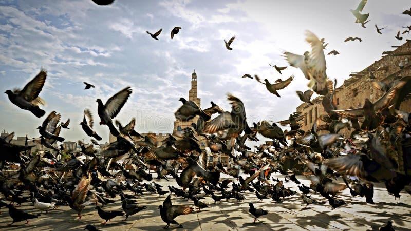 Volo dei piccioni in Souq Waqif immagini stock libere da diritti