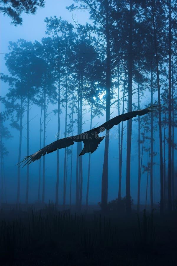 Volo del corvo attraverso la foresta di notte