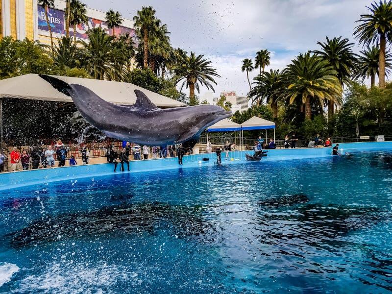 Volo del delfino nell'aria fotografia stock