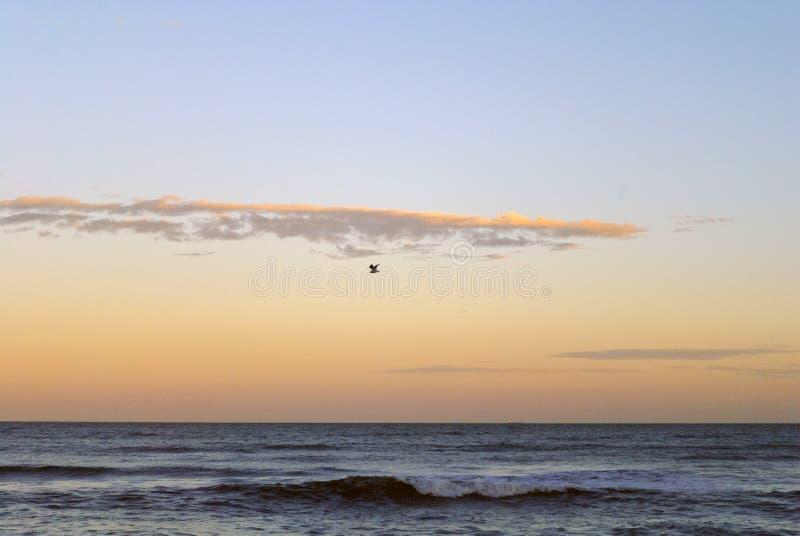Volo del gabbiano attraverso il mare con le ali spalancate immagine stock libera da diritti