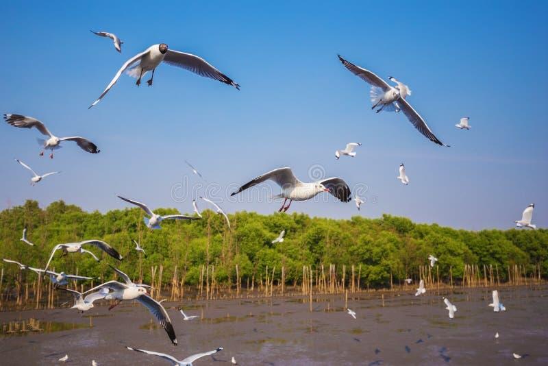 Volo del gabbiano con il mare ed il cielo a Bangpu, Tailandia immagine stock