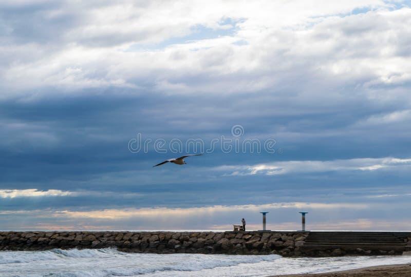 Volo del gabbiano contro il cielo nuvoloso drammatico blu fotografie stock libere da diritti