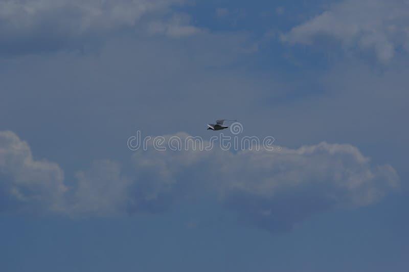 Volo del gabbiano nel cielo blu 3 fotografia stock libera da diritti