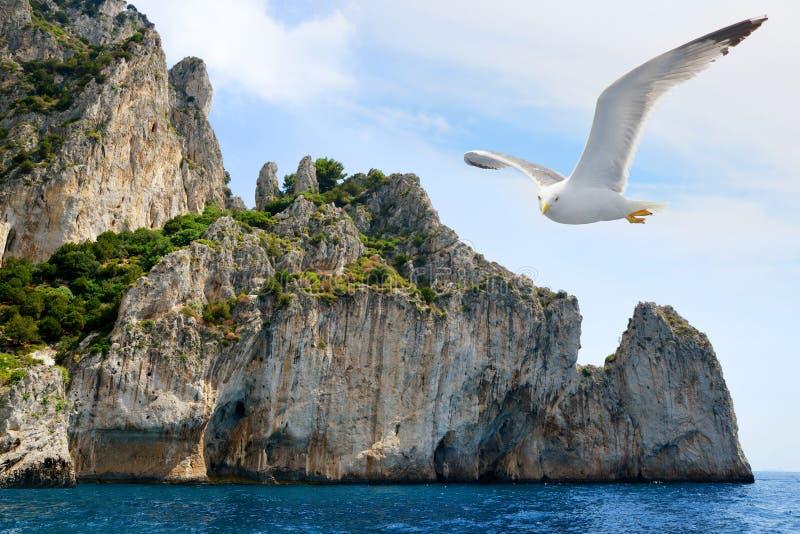 Volo del gabbiano vicino all'isola di Capri, Italia fotografia stock
