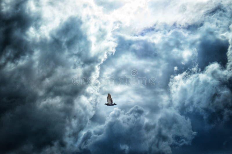 Volo del piccione nelle nuvole