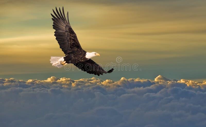 Volo dell'aquila calva sopra le nubi fotografie stock libere da diritti