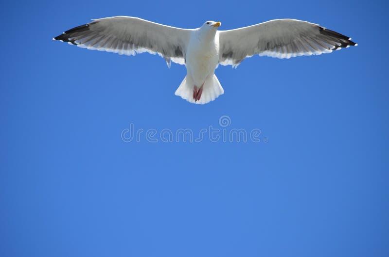 Volo dell'uccello immagini stock