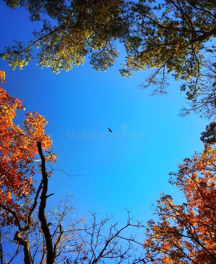 Volo dell'uccello immagine stock