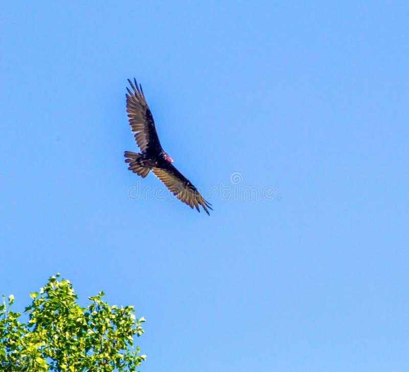 Volo dell'uccello attraverso il cielo fotografia stock