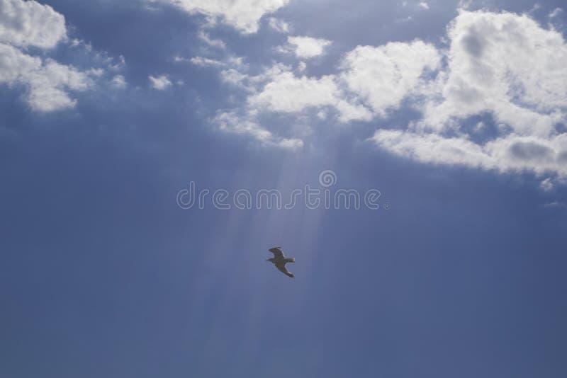 Volo dell'uccello nel cielo fotografia stock