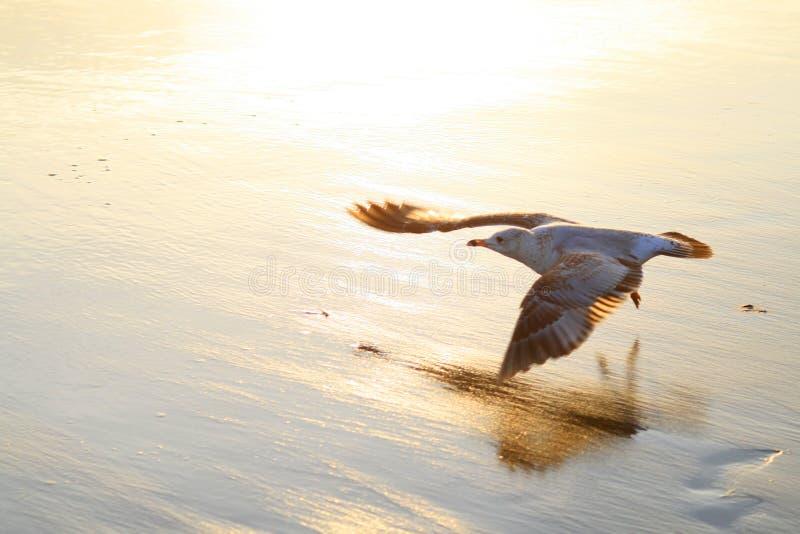 Volo dell'uccello sulla spiaggia fotografia stock
