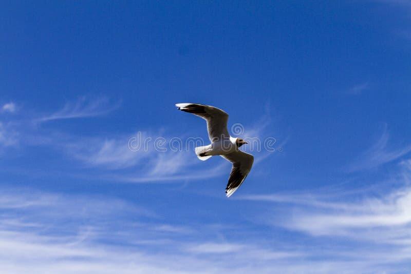 Volo dell'uccello in un giorno soleggiato fotografie stock libere da diritti