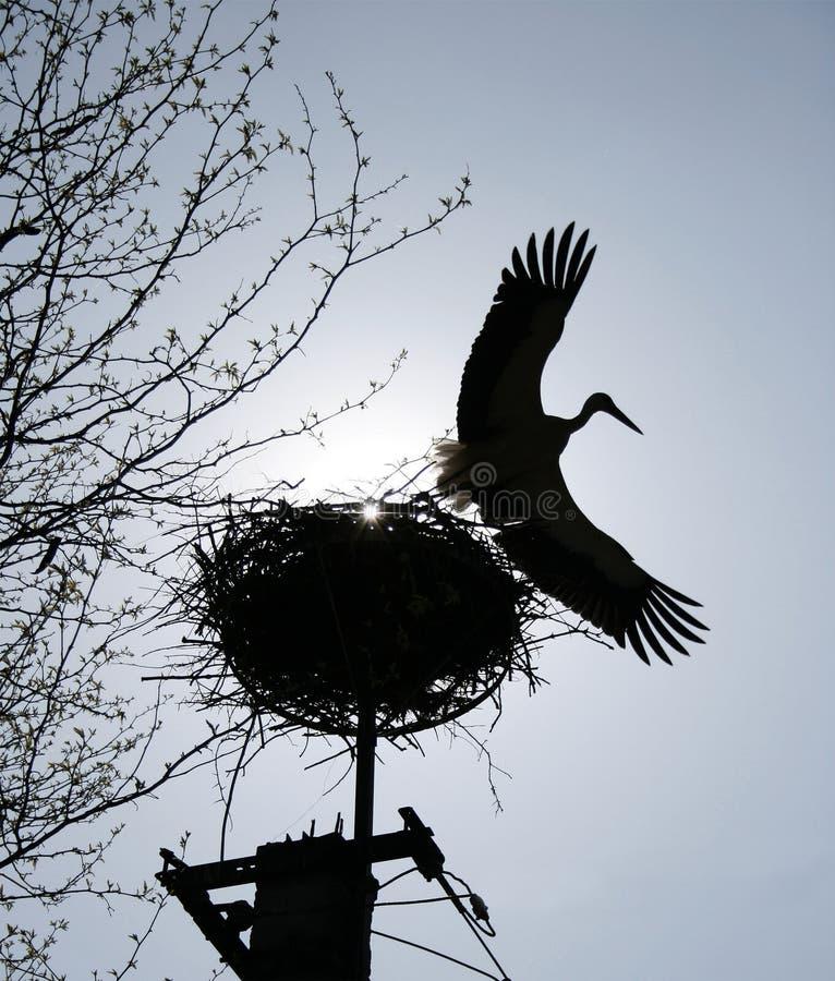 Volo della cicogna da un nido fotografia stock libera da diritti