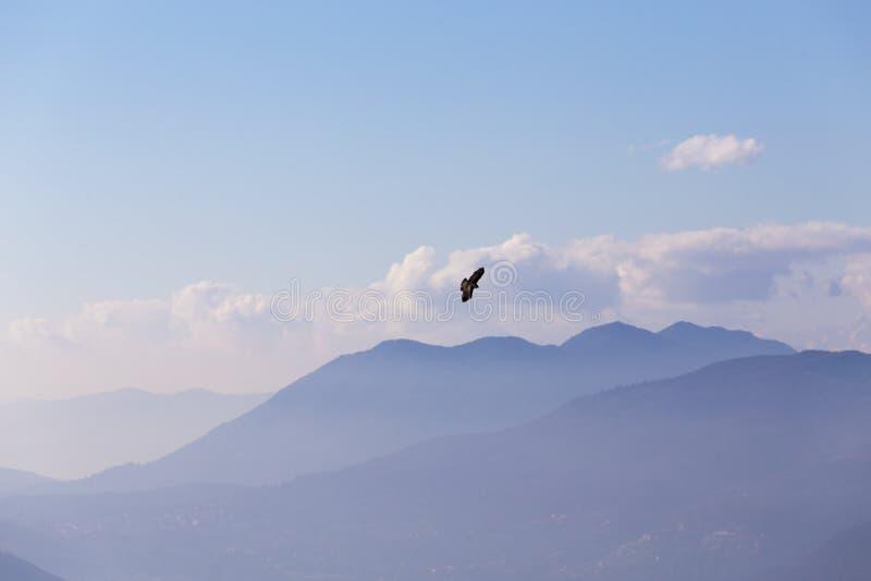 Volo di Eagle e le alpi immagine stock