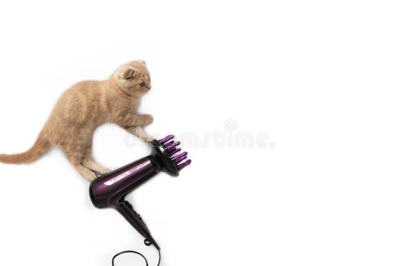 Volo divertente del gatto sul fon, isolato su fondo bianco Copi lo spazio Concetto creativo della carta di festa, insegna, pubbli immagine stock libera da diritti