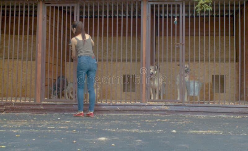 Volontär som matar hundkapplöpningen i ett hundskydd royaltyfri foto