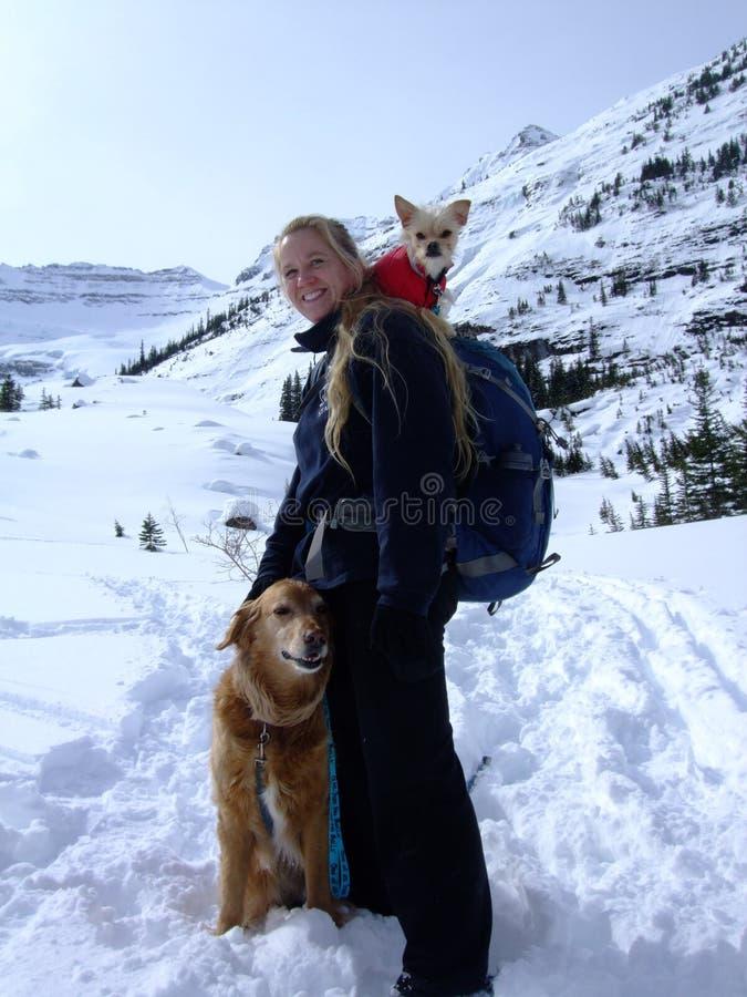 A volte la neve è troppo profonda! fotografia stock libera da diritti