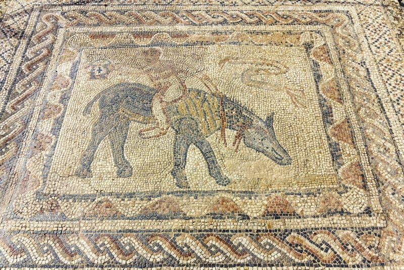 Volubilis考古学站点,古老罗马帝国城市,摩洛哥 库存照片