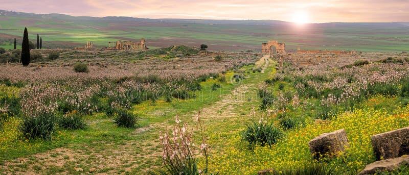 Volubilis dans Marocco images stock