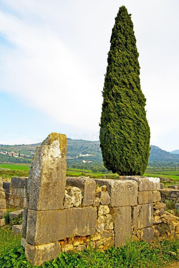volubilis in de cipres Romein van Marokko verslechterden monument stock foto
