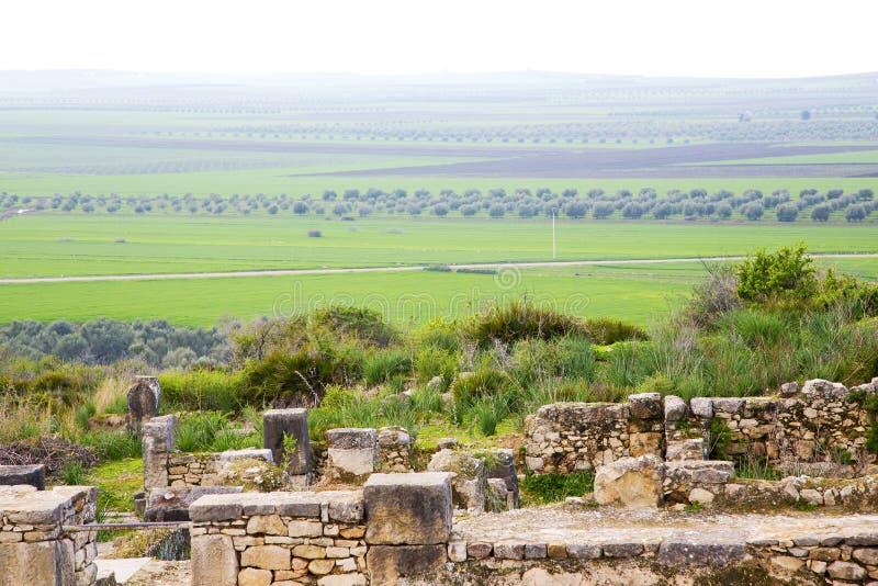 Volubilis in Marocco royalty-vrije stock fotografie
