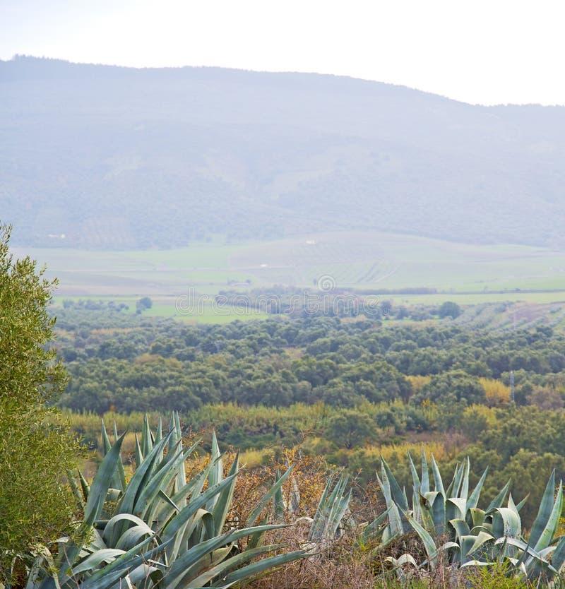 volubilis in Marokko Afrika de oude agave en de plaats royalty-vrije stock foto