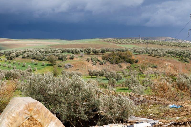 Volubilis nära Meknes i Marocko Volubilis är en delvis grävde Amazigh, därefter den romerska staden i Marocko placerade nära arkivfoto