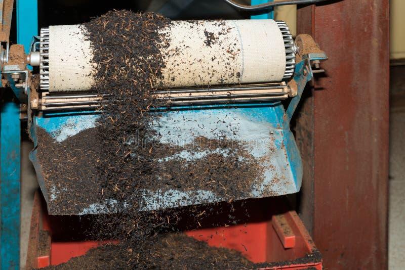 Volume do chá preto na linha de produção na fábrica do chá fotos de stock