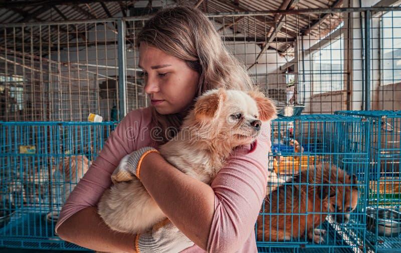 Voluntária feminina segura mãos, cão pequeno no abrigo Conceito de abrigo para animais fotografia de stock