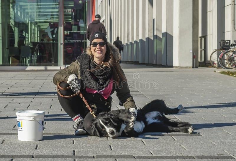 Voluntário do cão de Mira imagens de stock royalty free