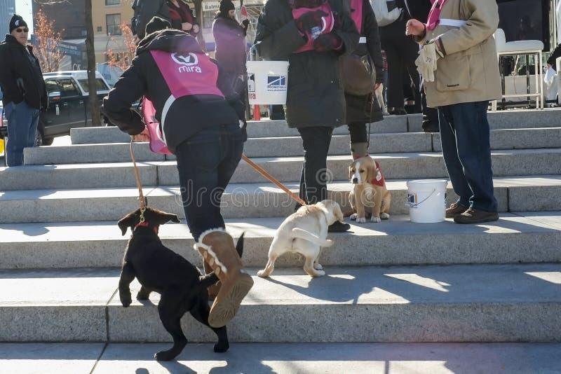 Voluntário dos cães de cachorrinhos de Mira imagem de stock royalty free