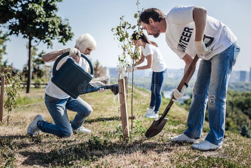 Voluntários de trabalho duros agradáveis que plantam árvores fotos de stock