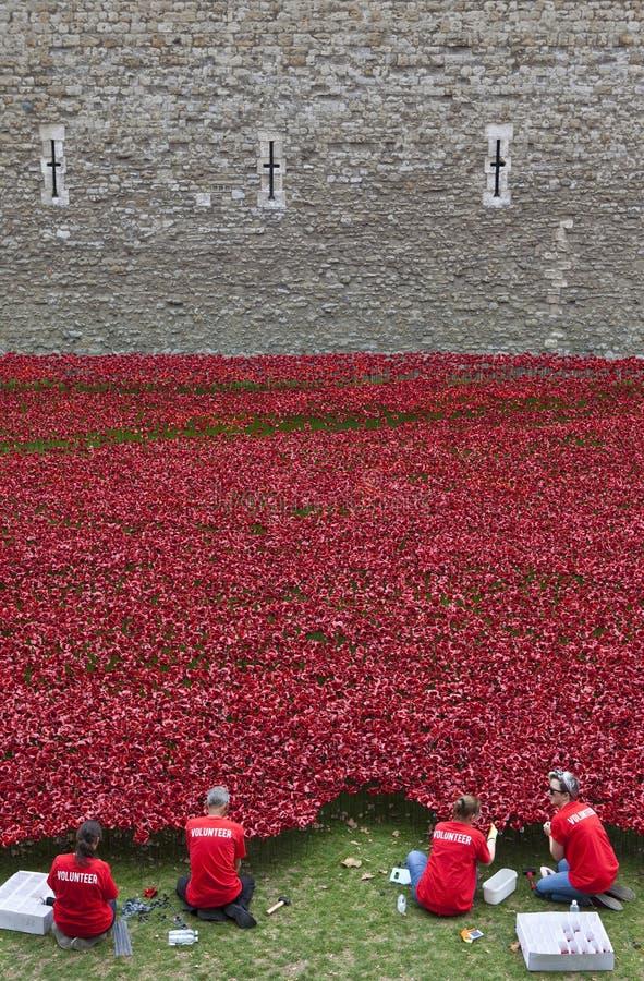 Voluntários na torre de Londres Poppy Installation fotografia de stock royalty free