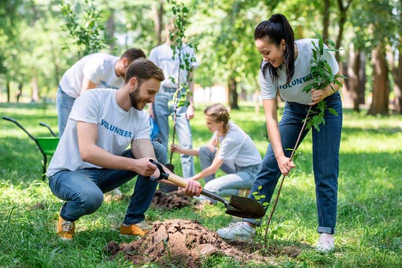 voluntários novos que plantam árvores no verde foto de stock
