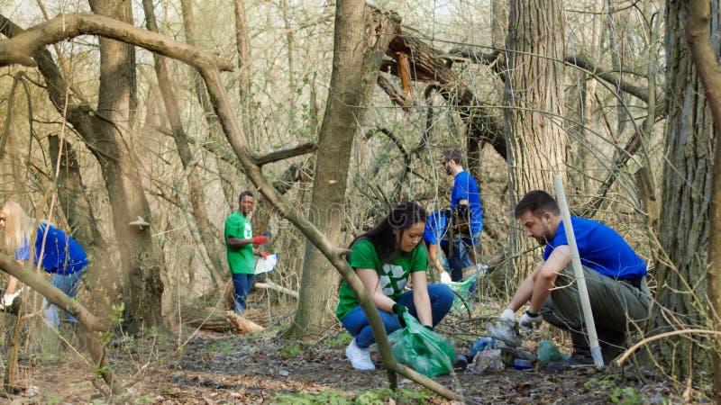 Voluntários que recolhem o lixo nas madeiras imagem de stock royalty free