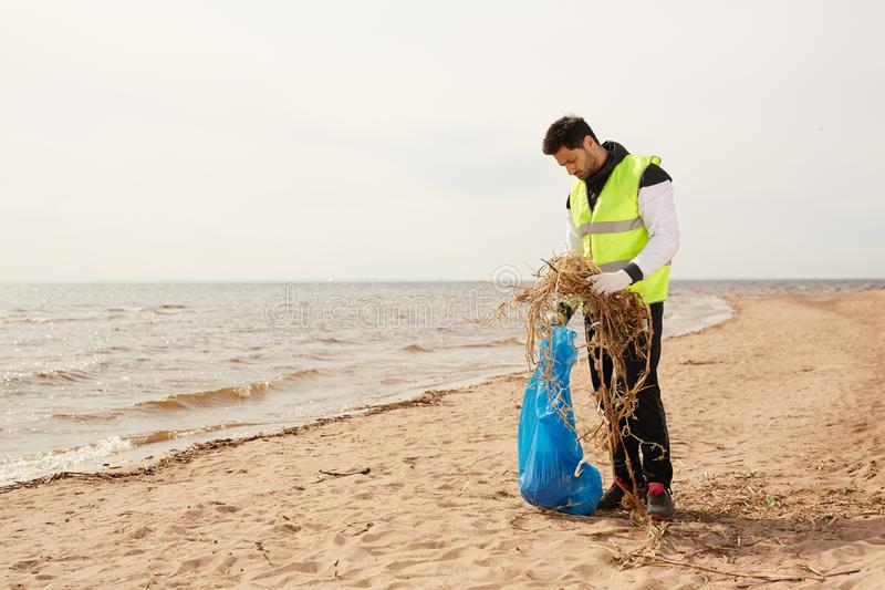 Volunteer on the beach. Young volunteer in protective workwear standing on sandy beach while putting natural wastes into blue sack during work stock photo