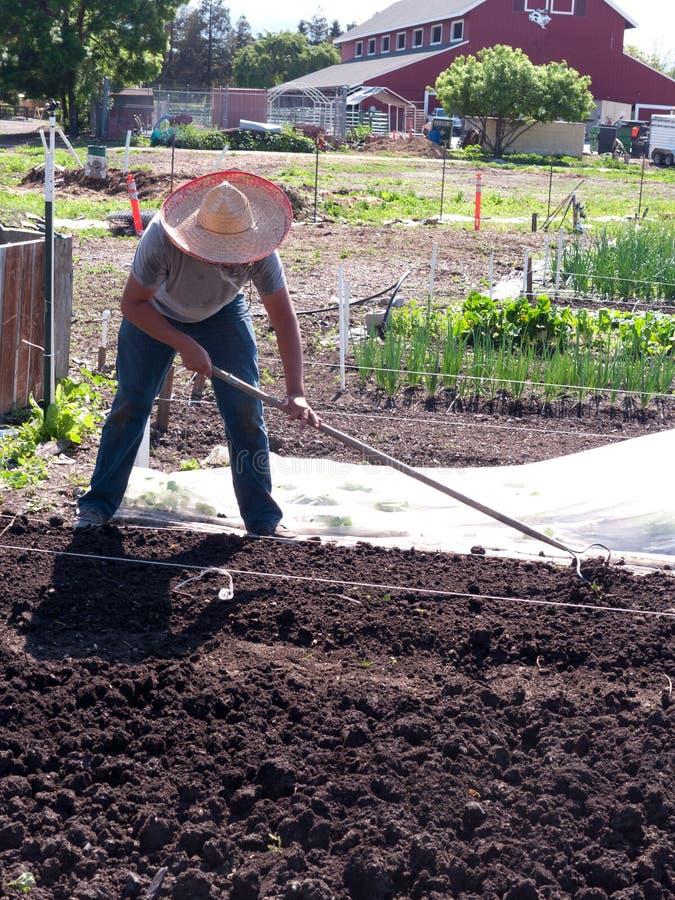 Volunteer  Preparing Soil At Community Farm Editorial Stock Photo