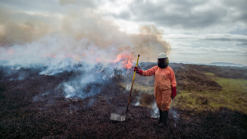 Volunteer Woman Firefighter. A volunteer female firefighter in protective clothing helping to control a heathland fire, set deliberately as part of a habitat stock photo