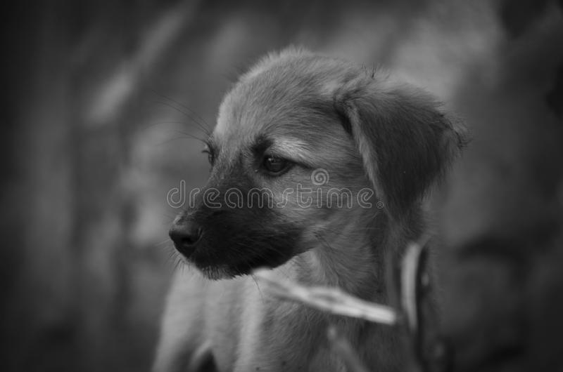 Another puppy who lives an animal shelter royalty free stock photo