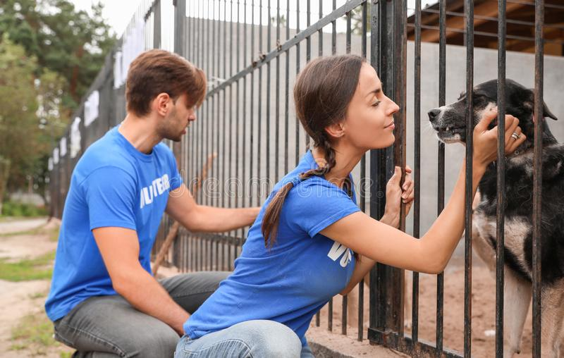 Volunteers near dog cage at animal shelter. Outdoors stock photography