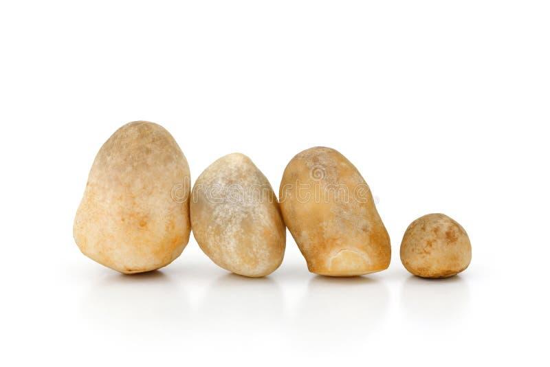 Volvariellavolvacea, Straw Mushroom op witte achtergrond royalty-vrije stock fotografie