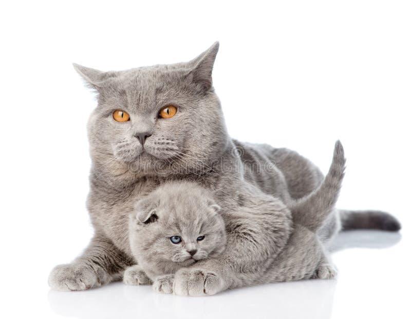Volwassen moederkat die een pasgeboren katje koesteren Geïsoleerd op wit stock fotografie
